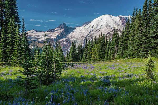 Summer On Mount Rainier Art Print