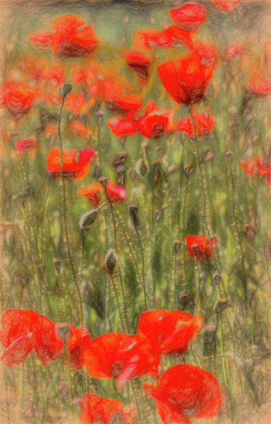 Wall Art - Photograph - Summer Poppy's Art by David Pyatt