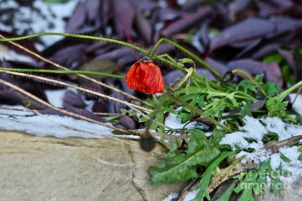 Photograph - Summer Remnat by Ann E Robson