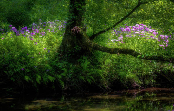 Photograph - Summer Sanctuary Pisgah National Forest by Donnie Whitaker