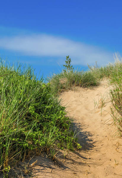 Photograph - Summer Sand Dune Trail by Dan Sproul