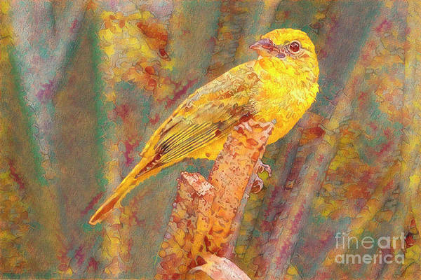 Wall Art - Photograph - Summer Tanager by Deborah Benoit