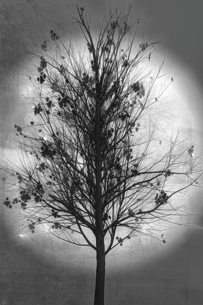 Digital Art - Summer Tree In Black And White by Debra and Dave Vanderlaan