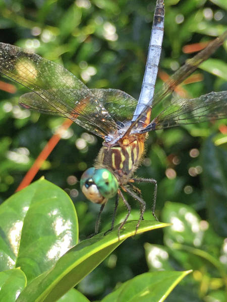 Photograph - Summer Visitor by Matthew Seufer