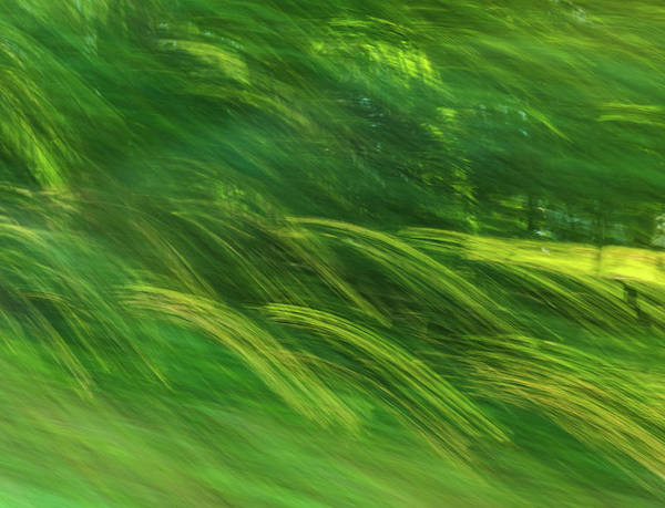 Photograph - Summer Waves Of Green by Dan Sproul
