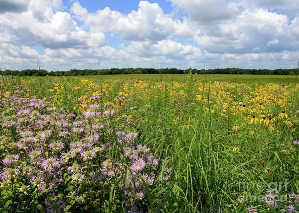 Photograph - Summer Wild Flowers by Paula Guttilla