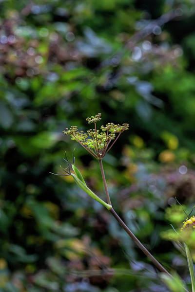 Photograph - Summerflowers And Raindrops by Robert Ullmann