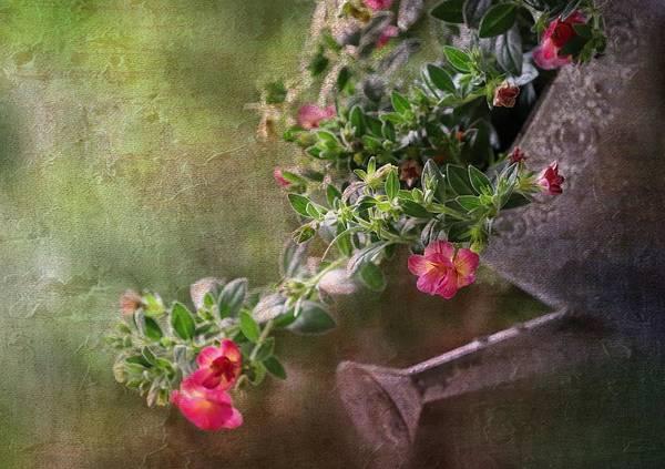 Wall Art - Photograph - Summergarden by Heike Hultsch