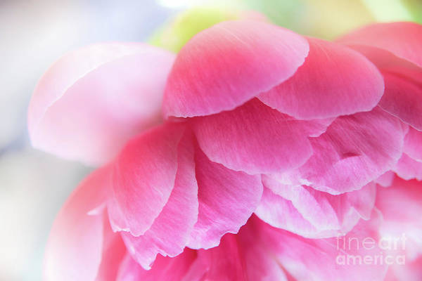 Wall Art - Photograph - Summer's Colors by Flo Photography