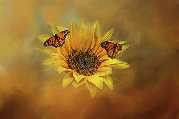 Photograph - Summertime Beauties  by Kelley Parker
