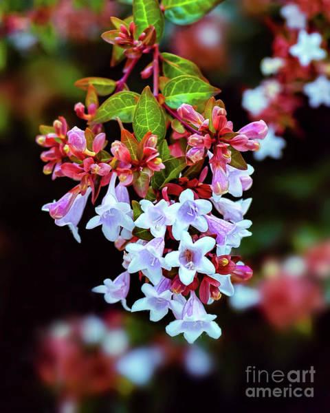 Photograph - Summertime Beauty by Susan Warren