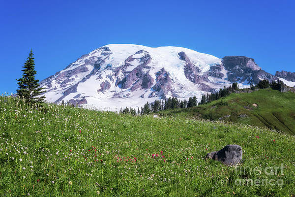 Photograph - Summertime View Of Mt Rainier by Sharon Seaward
