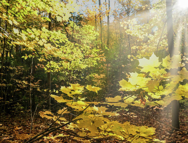 Photograph - Sun And Nature by Nick Mares