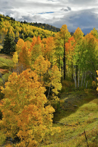Photograph - Sun Bathes Aspens Along Highway 62 by Ray Mathis