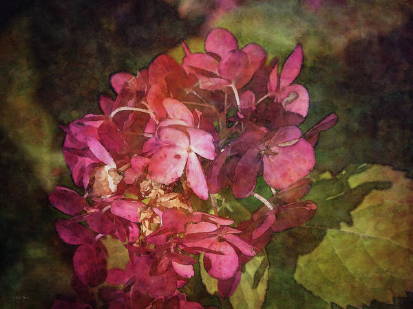 Photograph - Sun Bleached Red 5240 Idp_2 by Steven Ward