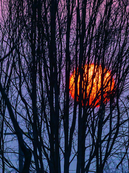 Sun Set Photograph - Sun Caught In Tree Branches by Garry Gay