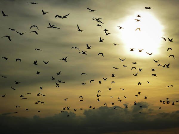 Airboat Photograph - Sun Flock by Dave Matchett