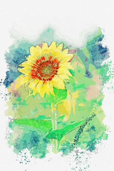 Wall Art - Painting - Sun Flower Watercolor By Ahmet Asar by Ahmet Asar