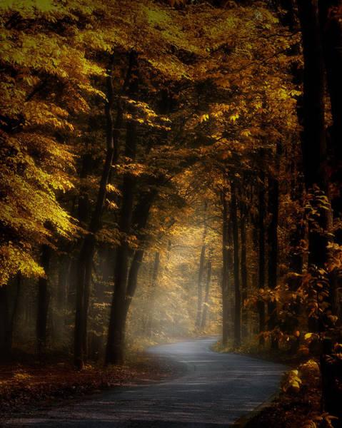Photograph - Sun Forest Sun by Kees Van Dongen