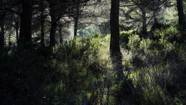 Photograph - Sun In The Forest by August Timmermans