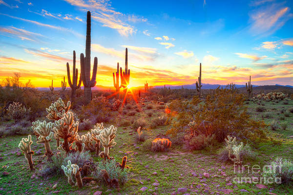 Wall Art - Photograph - Sun Is Setting Between Saguaros, In by Anton Foltin
