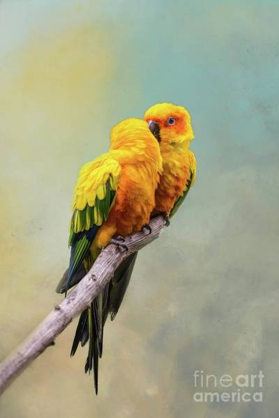 Wall Art - Photograph - Sun Parakeets Love by Eva Lechner