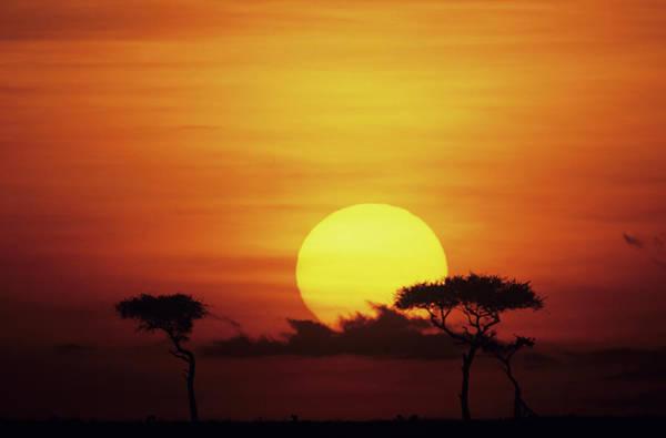 Savannah Photograph - Sun Rising Over Savannah, Masai Mara by Anup Shah