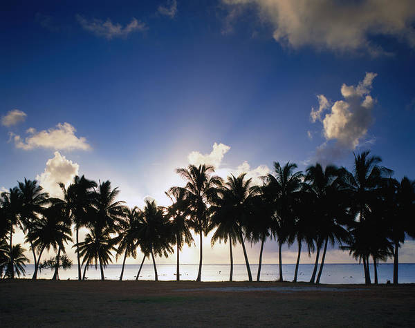 Setting Photograph - Sun Setting Behind Palm Tree Lined by Manfred Gottschalk