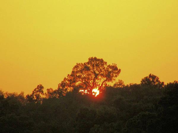 Wall Art - Photograph - Sun Setting Behind Trees.  by Tina Tillery