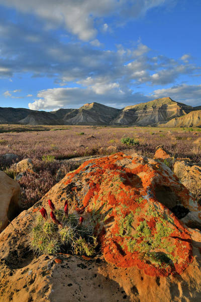 Photograph - Sun Setting On Boulder And Cacti In Book Cliffs by Ray Mathis