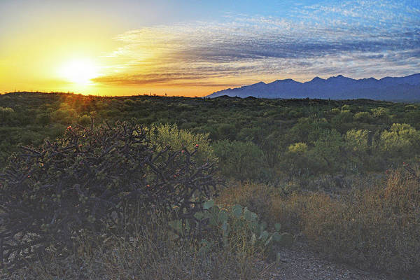 Photograph - Sun Setting Over Cholla And Catalinas  by Chance Kafka