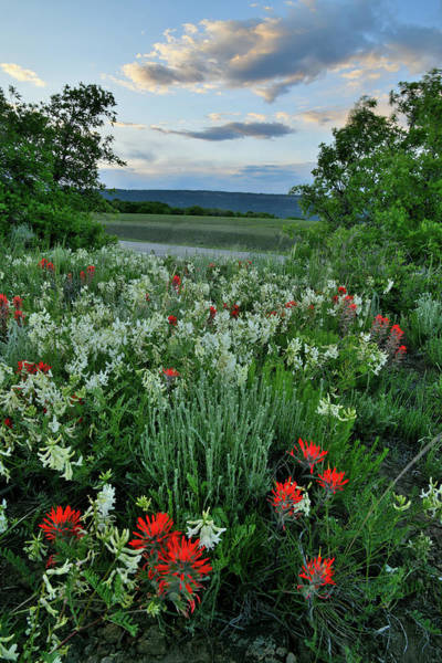 Photograph - Sun Setting Over Dallas Divide Wildflowers by Ray Mathis