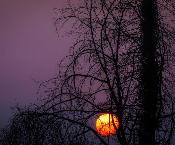 Wall Art - Photograph - Sun Setting Through Trees by Garry Gay