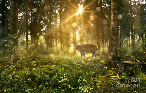 Wall Art - Photograph - Sun Shines Into A Fairytale Forest by Lassedesignen