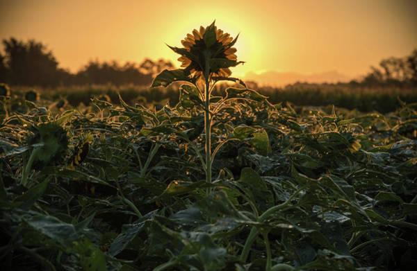 Photograph - Sun Spot by Kristopher Schoenleber