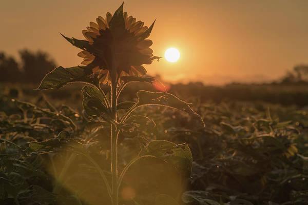 Photograph - Sun Worshiper by Kristopher Schoenleber