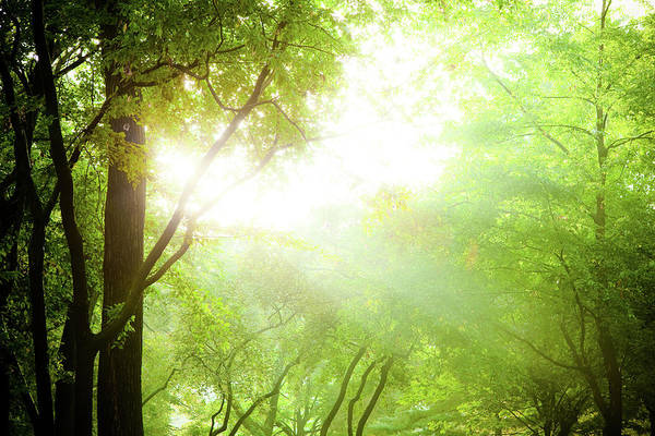 Environmental Issues Photograph - Sunbeam Coming Through Tree Branches by Pawel.gaul