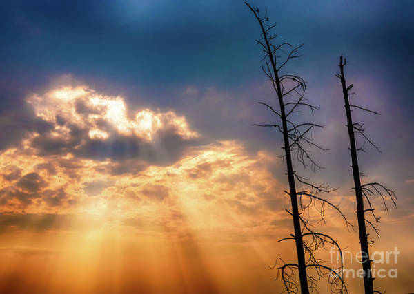 Photograph - Sunbeams by Dheeraj Mutha