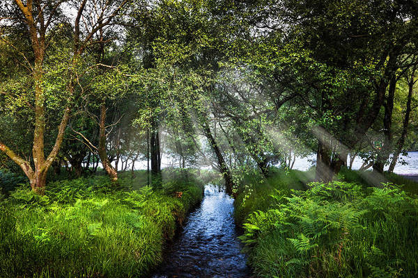 Photograph - Sunbeams On A Summer Morning In Ireland by Debra and Dave Vanderlaan