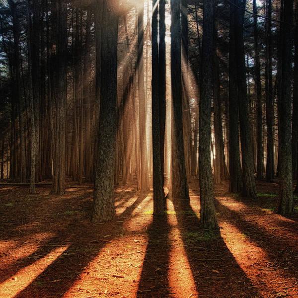 Half Moon Bay Photograph - Sunbeams by Trina Dopp Photography