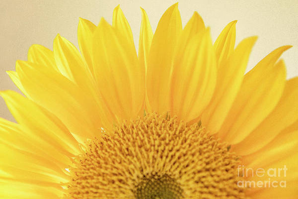 Wall Art - Photograph - Sunburst by Julia Hiebaum