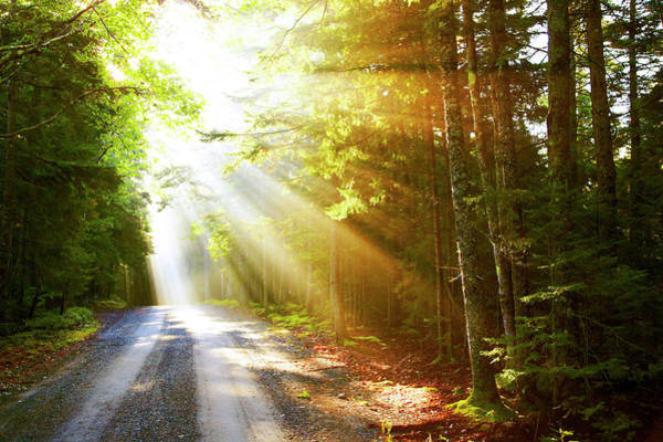 Acadia National Park Wall Art - Photograph - Sunflare On Road by Thomas Northcut