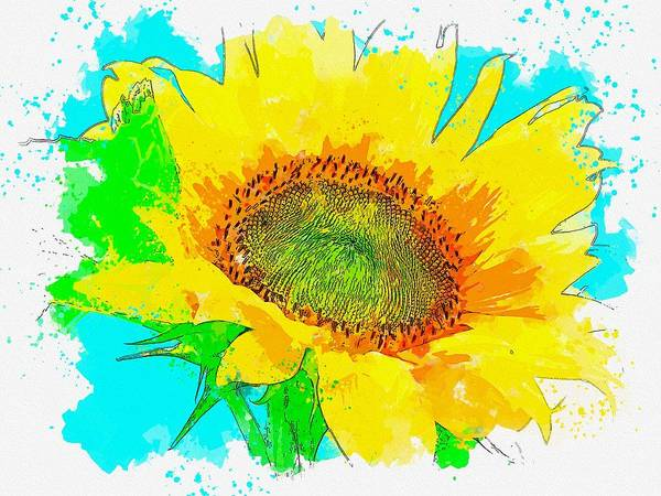 Wall Art - Painting - Sunflower 3 Watercolor By Ahmet Asar by Ahmet Asar