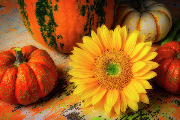 Wall Art - Photograph - Sunflower And Pumpkins by Garry Gay