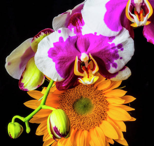 Wall Art - Photograph - Sunflower And Purple White Orchid by Garry Gay
