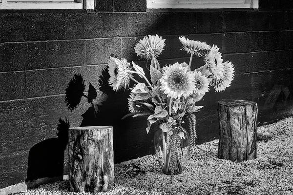 Photograph - Sunflower Arrangement Bw by Susan Candelario