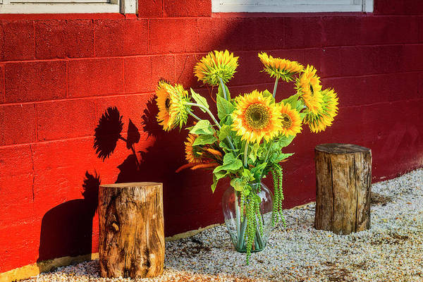 Wall Art - Photograph - Sunflower Arrangement by Susan Candelario