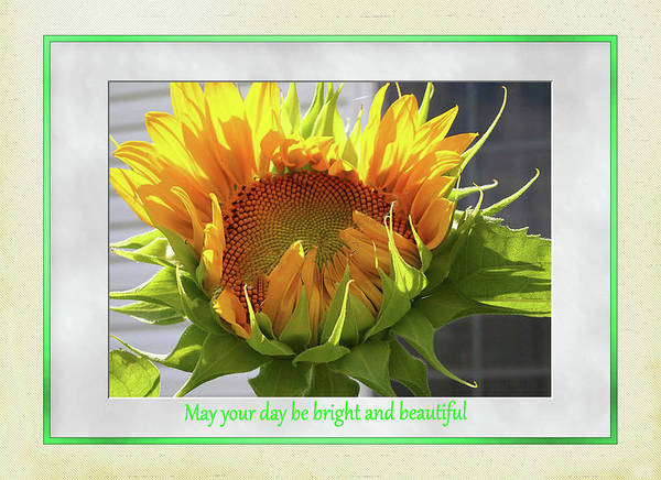 Digital Art - Sunflower Birthday by Jacqueline Sleter