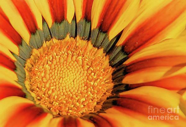 Wall Art - Photograph - Sunflower Center by Elaine Manley