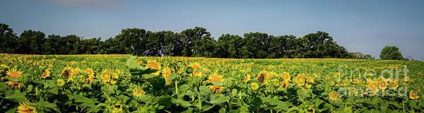 Wall Art - Photograph - Sunflower Collection # 9   The Sunflower Field by Deborah Klubertanz